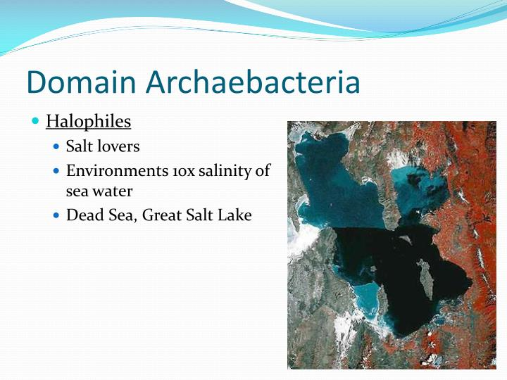 Domain Archaebacteria