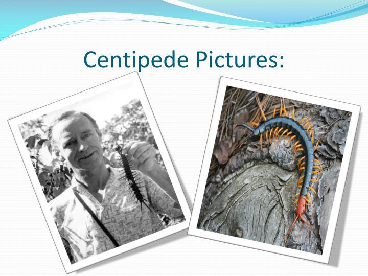 Centipede Pictures: