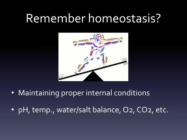 Remember homeostasis?