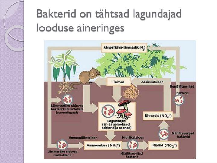 Bakterid on tähtsad lagundajad looduse aineringes