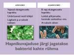 hapnikuvajaduse j rgi jagatakse bakterid kahte r hma