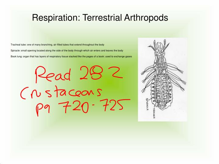 Respiration: Terrestrial Arthropods