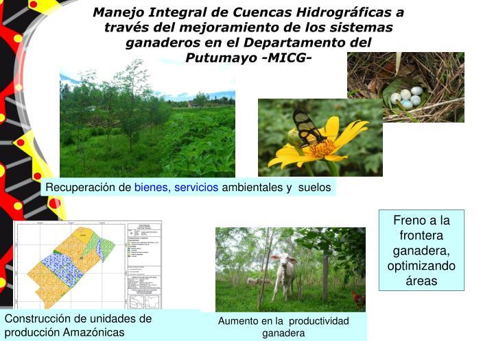 Manejo Integral de Cuencas Hidrográficas a través del mejoramiento de los sistemas ganaderos en el Departamento del Putumayo -MICG-