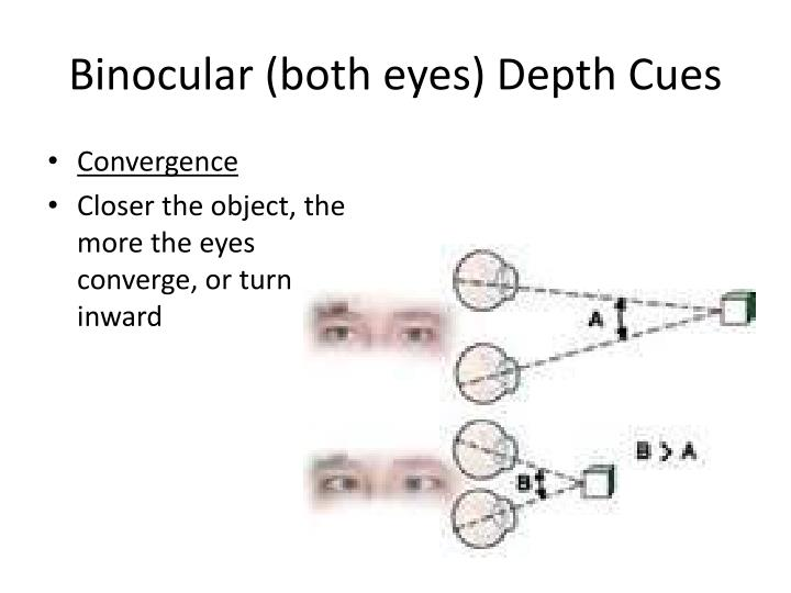 Binocular (both eyes) Depth Cues