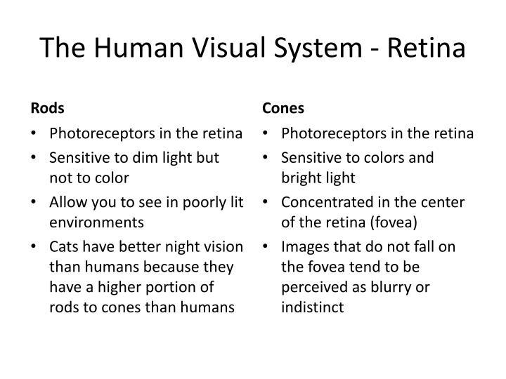 The Human Visual System - Retina