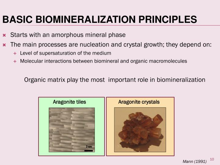 Starts with an amorphous mineral phase