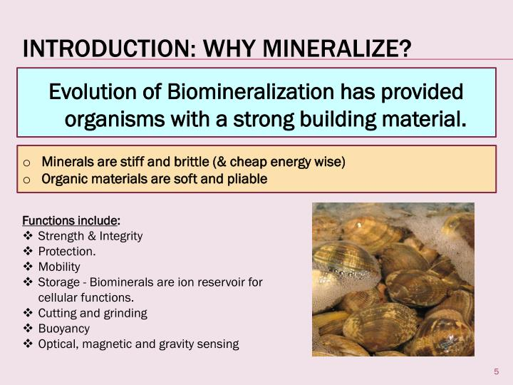 Evolution of Biomineralization has provided organisms with a strong building material.