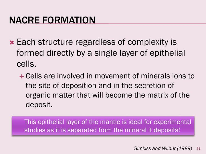 Each structure regardless of complexity is formed directly by a single layer of epithelial cells.