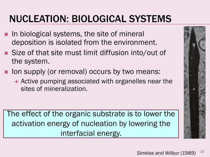 In biological systems, the site of mineral deposition is isolated from the environment.