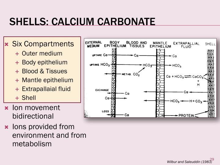 Shells: Calcium Carbonate