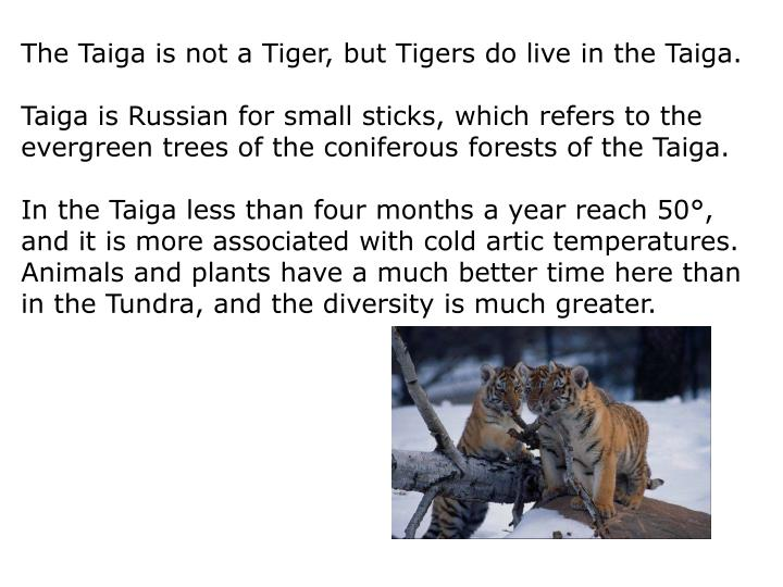 The Taiga is not a Tiger, but Tigers do live in the Taiga.