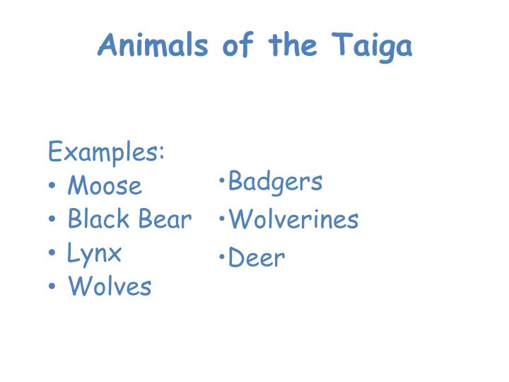 Animals of the Taiga
