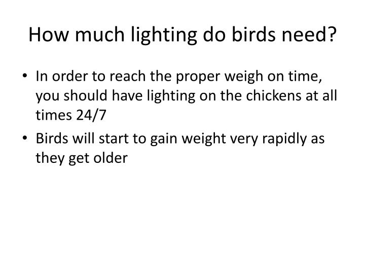 How much lighting do birds need?