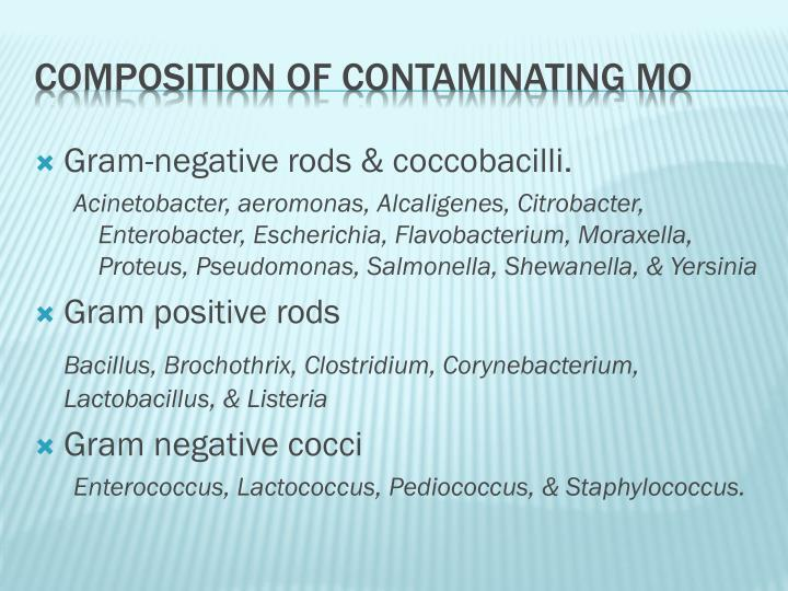 Gram-negative rods & coccobacilli.