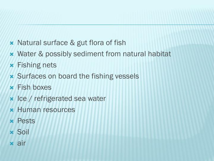 Natural surface & gut flora of fish