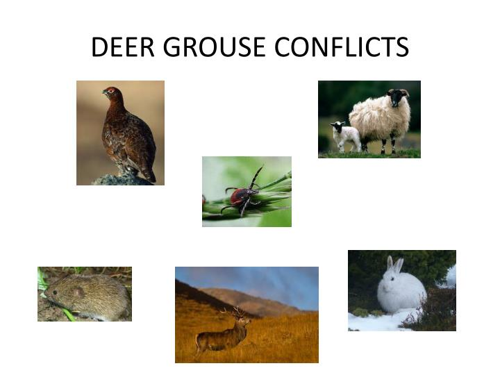DEER GROUSE CONFLICTS