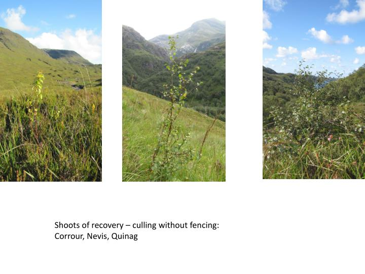 Shoots of recovery – culling without fencing: