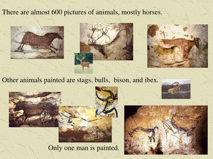 There are almost 600 pictures of animals, mostly horses.