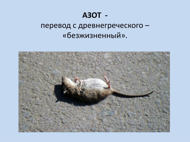 АЗОТ  -
