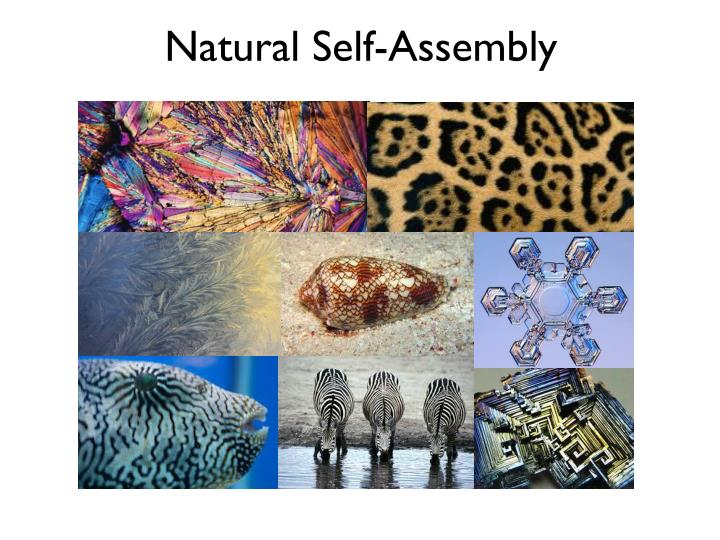 Natural Self-Assembly