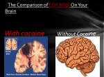 the comparison of cocaine on your brain