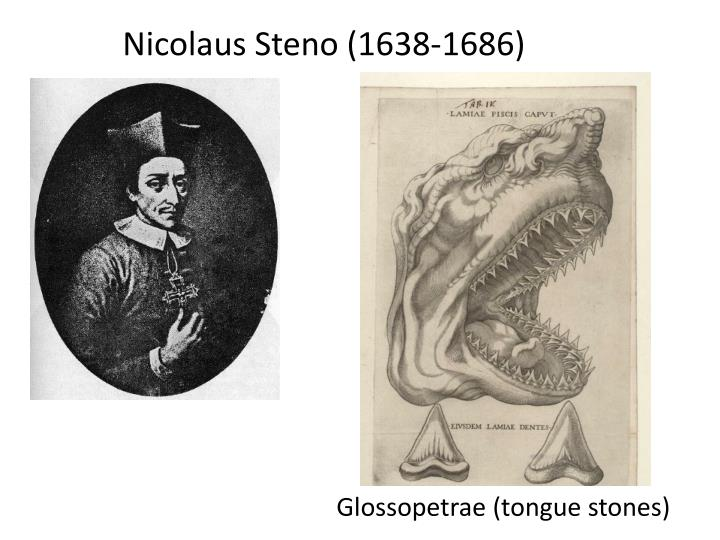 Nicolaus Steno (1638-1686)