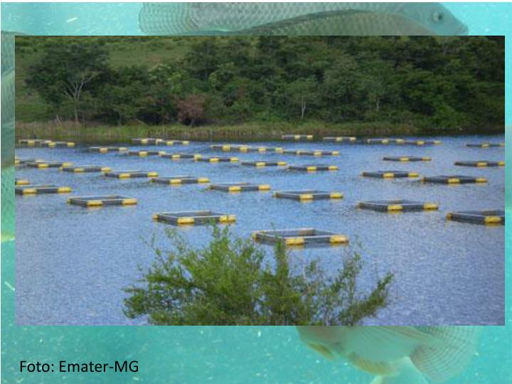 Foto: Emater-MG