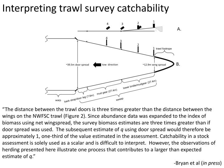 Interpreting trawl survey