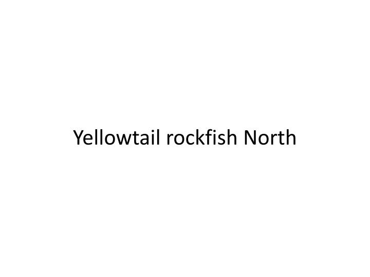 Yellowtail rockfish North