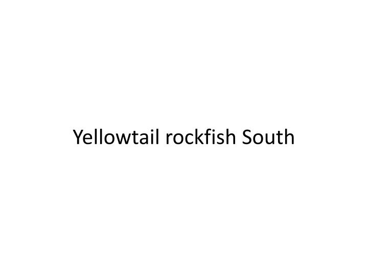 Yellowtail rockfish South