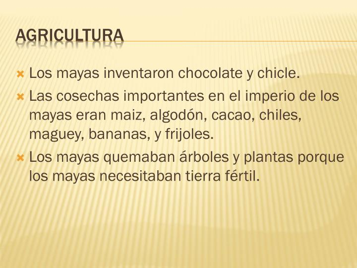 Los mayas inventaron chocolate y chicle.
