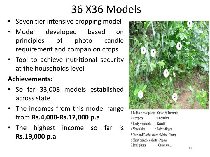 36 X36 Models