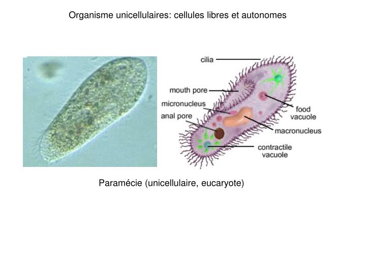 Ppt Biologie Cellulaire Powerpoint Presentation Id 2024728