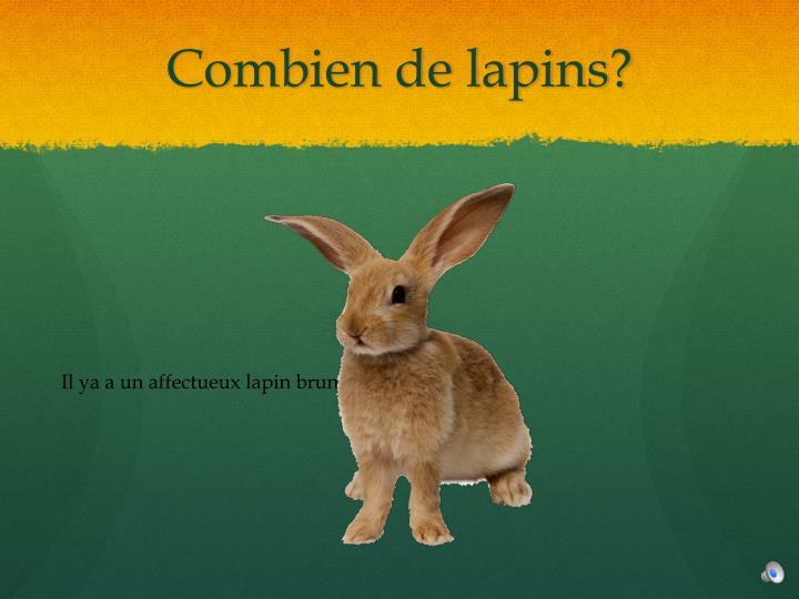 Combien de lapins?