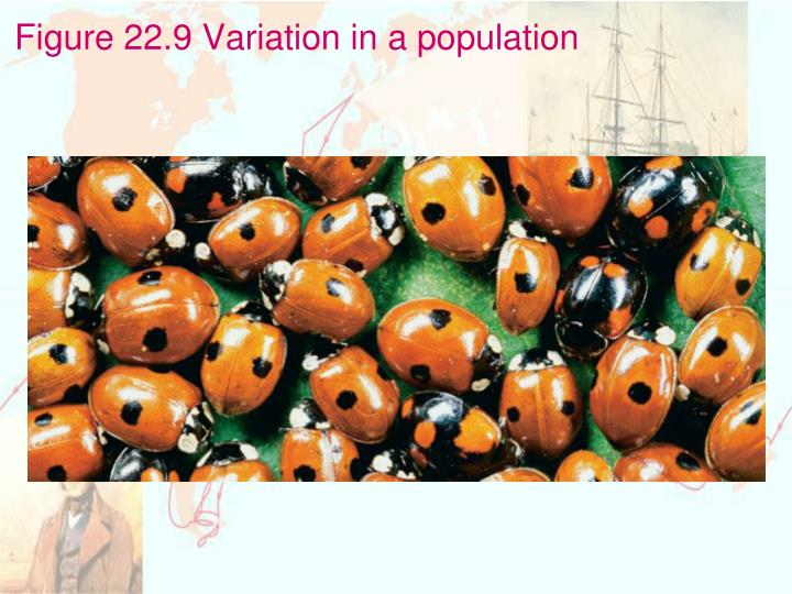 Figure 22.9 Variation in a population