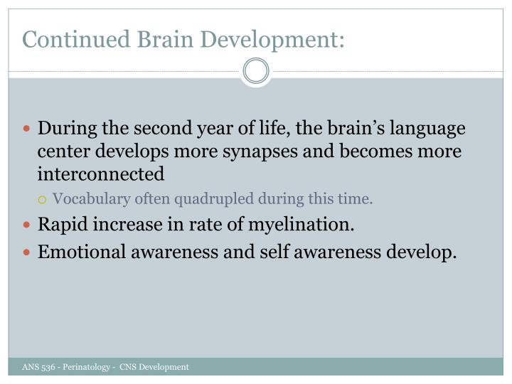 Continued Brain Development:
