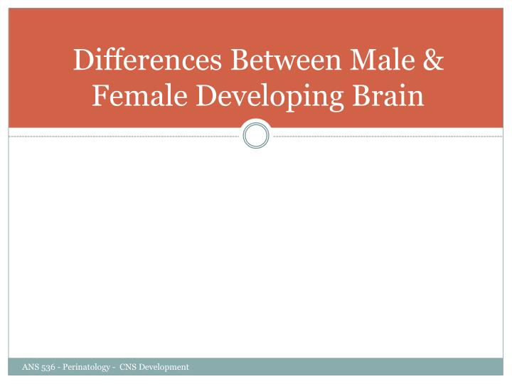 Differences Between Male & Female Developing Brain