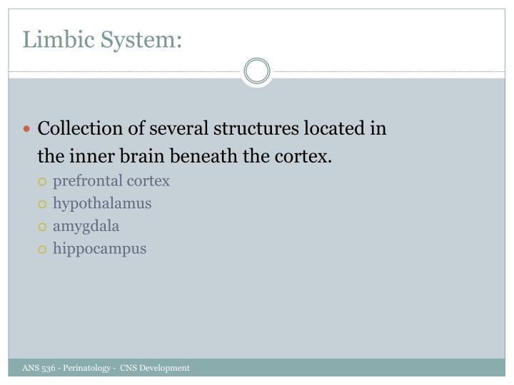 Limbic System: