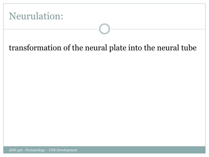 Neurulation: