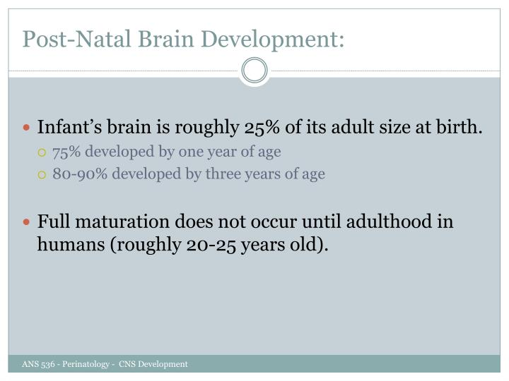 Post-Natal Brain Development: