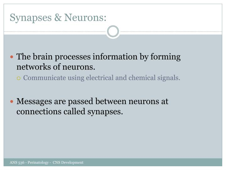 Synapses & Neurons: