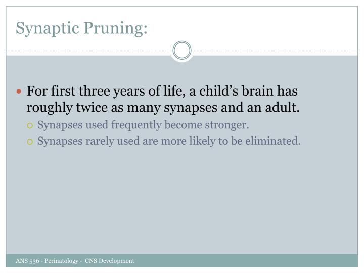 Synaptic Pruning: