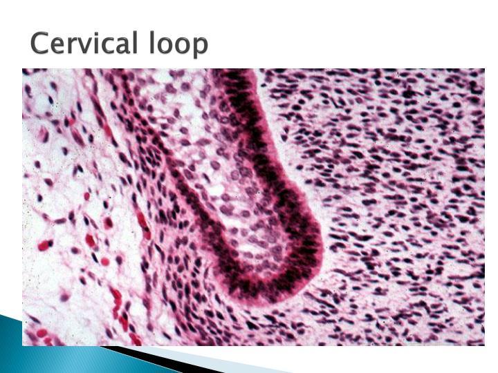 Cervical