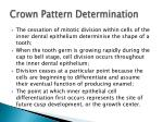 crown pattern determination
