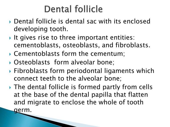 Dental follicle