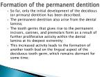 formation of the permanent dentition