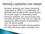 hertwig s epithelial root sheath