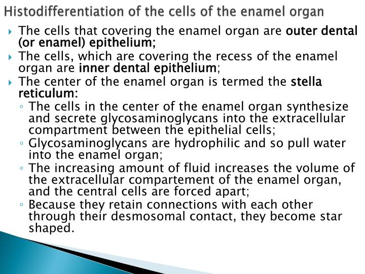 Histodifferentiation