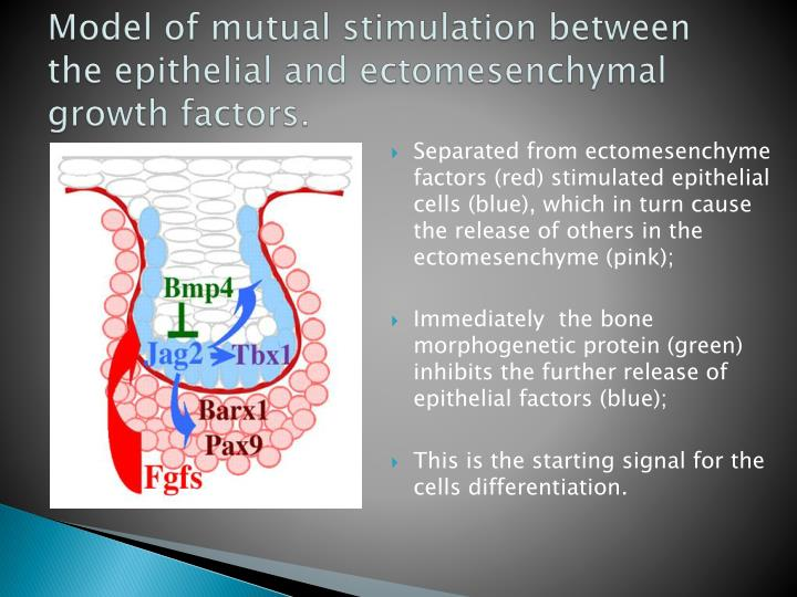 Model of mutual stimulation between the