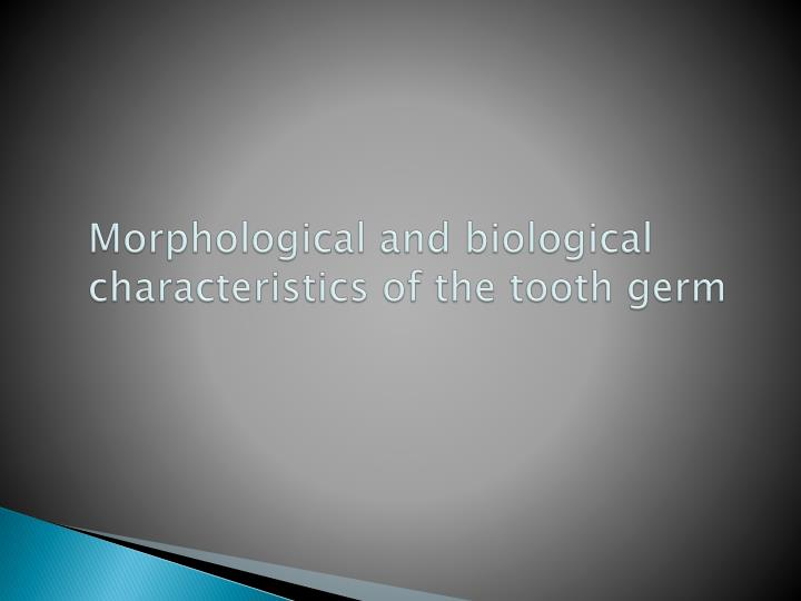 Morphological and biological characteristics of the tooth germ